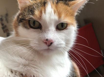 Bild: Hanni mit Hautkrebs am Nasenspiegel