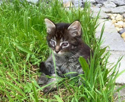 Bild: Kätzchen Trinity sitzt im Gras