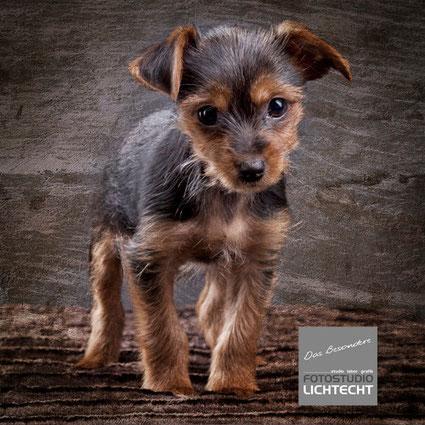 Fotoshooting mit Hund Chemnitz