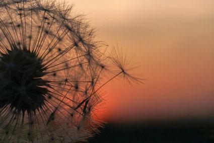 www.ronaldosephius.nl Steiger zon in wolken Bewust Groeien vanuit innerlijke kracht
