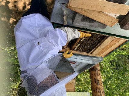 Imker bei der Durchsicht, Bienen, Wabe, Bienenzuchtverein, Bienen, Merkstein, Heinsberg-Merkstein, Imker, Verein, Honig