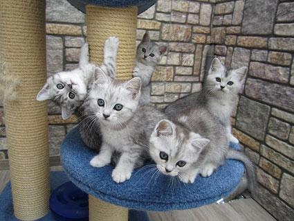 Finnley, Filou, Fiene, Frieda und Freddy 9 Wochen