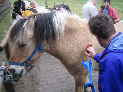 Kontaktaufnahme mit den Pferden und Schulung der Motorik