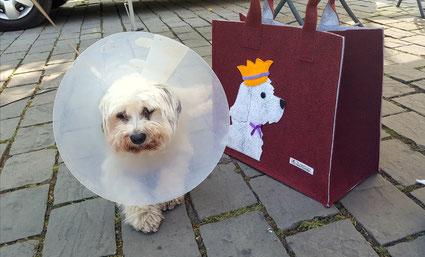 14.07.2018 Hund ist Hund, Foto: Dagmar Oetken