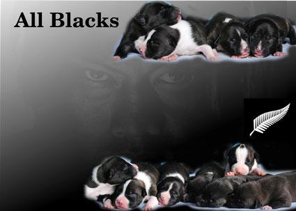 I 4 maschietti e le 7 femmine di Leeloo!