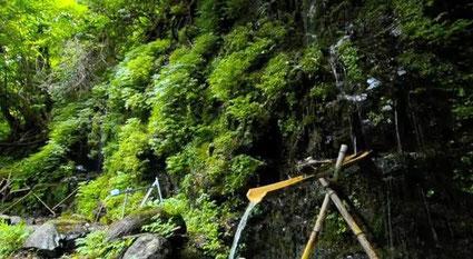 信州安曇野の延命水