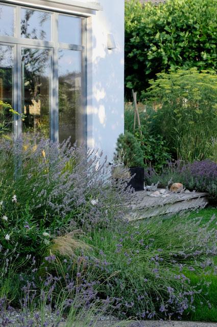 dieartigeGARTEN // Lavendel an der West-Terrasse
