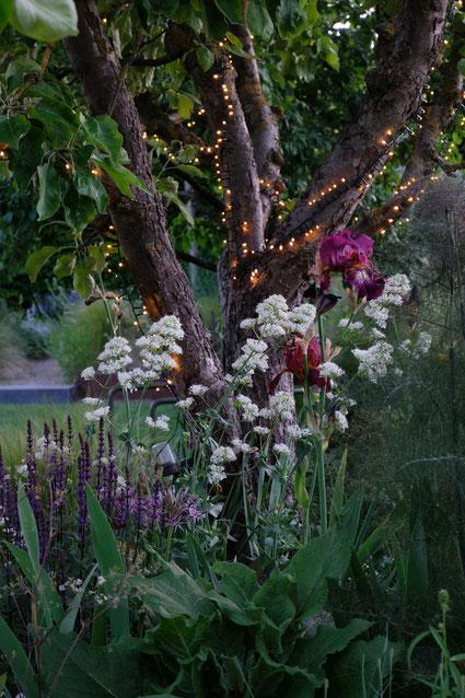dieartigeGARTEN //Mystic Beet with Caradonna, Bronze-fenchel, Spornblume + iris