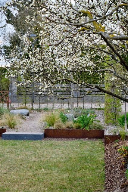 dieartigeGARTEN // März, Frühlingsgarten - die Pflaumenblüte+Mittelmeerbeet+lichte Buchenhecke