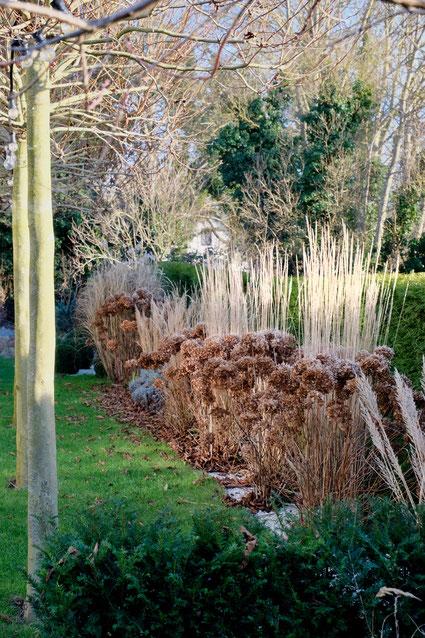 dieartigeGARTEN // Januar, Wintergarten - Hortensien, Garten-Reitgras, Chinaschilf + Platanen