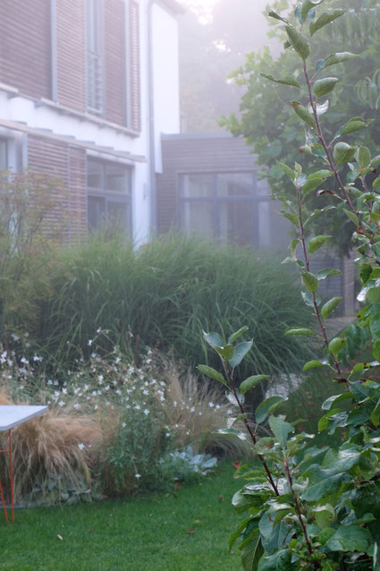 dieartigeGARTEN // Nebel im Herbstgarten - Südgarten m. Chinaschilf, Prachtkerze + Federgras