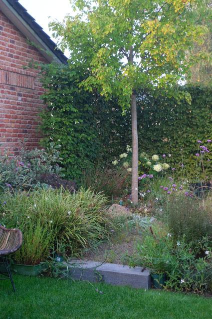 dieartigeGARTEN // Nebel im Herbstgarten - Purpur-Garten mit Echinacea + Rutenhirse