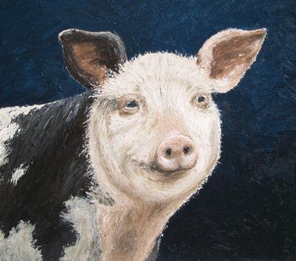 """Bentheimer Landschwein """"Nathan"""", Öl auf Leinwand, 35 x 40 cm"""