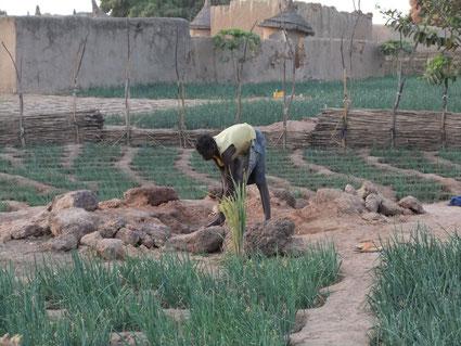 Bénéficier de l'eau, permettra également d'espérer un développement de l'économie locale, par la possibilité d'une agriculture locale (ici dans un jardin des environs de Réo)
