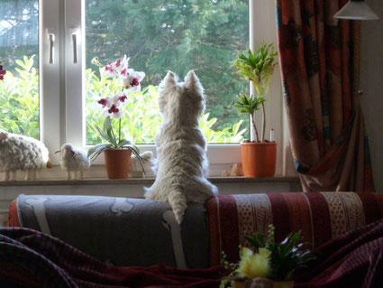 Luna...auf ihrem Beobachtungsposten...