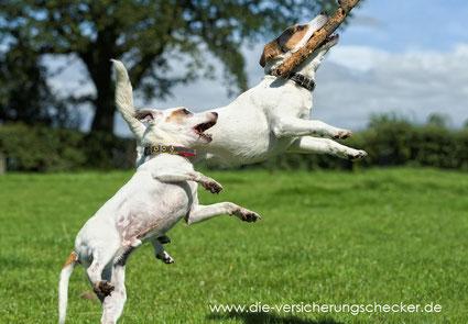 Erstattungssatz Selbstbeteiligung Hundeversicherung
