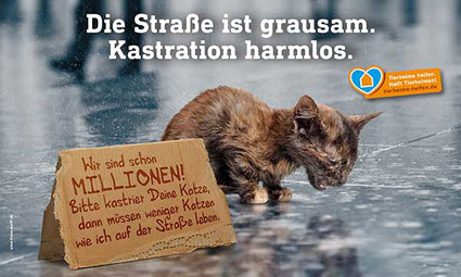 Bild: Deutscher Tierschutzbund e.V.