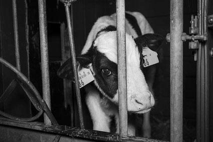 Foto: Animal Equality