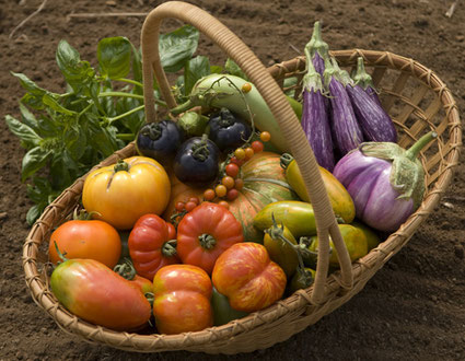 7月末の野菜たち