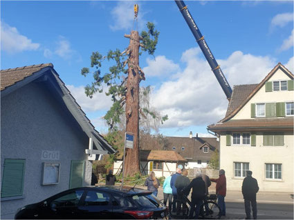Der grosse Baum im Grüt ist nicht mehr. Grund: Bauprojekt - und Pilzbefall. Bild: zvg