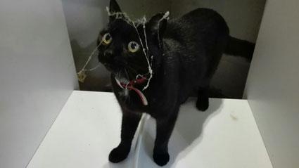 Katze Alice als Putzfee (ein Katzenmädchen aus der Verwandschaft)