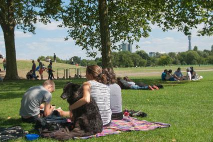 Picknick mit Hund im Regent's Park, London