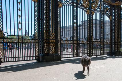 Hund vor dem Tor Green Park zum Buckingham Palace