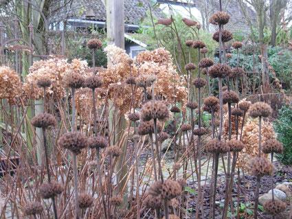 Bild: lebendiger Garten im Januar