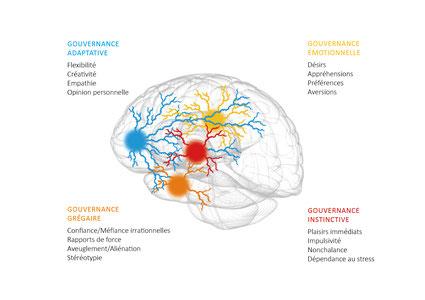 Les 4 principales gouvernances dans notre cerveau