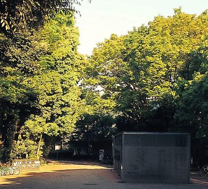 横浜国立大学キャンパス内の森林