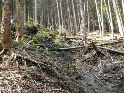 崩れかけの針葉樹林
