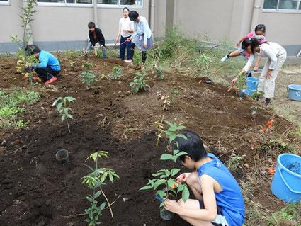 小学校での植樹の様子