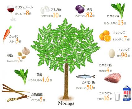 人類を救う奇跡の植物「モリンガ」