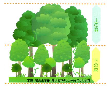 理想的な森林