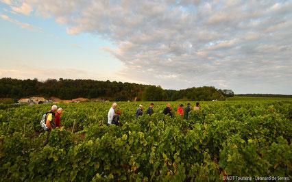 half-day-Myriam-Fouasse-Robert-guided-wine-tours-tastings-Loire-Valley-vineyard-Vouvray-Touraine-Tours-Amboise-Rendez-Vous-dans-les-Vignes