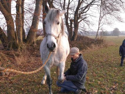Andrea Schmitz-Ostkamp bietet Osteopathie und Physiotherapie für Hunde und Pferde im Raum Gütersloh, Isselhorst an.