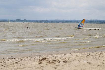 Ein Surfer mit orange-blauem Segel flitzt von rechts nach links über die Wellen des  Dümmer-Sees.