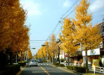 中央線の街路樹