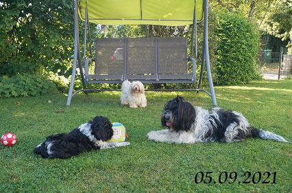Xanti, Ivy, Zamantha und Lilli