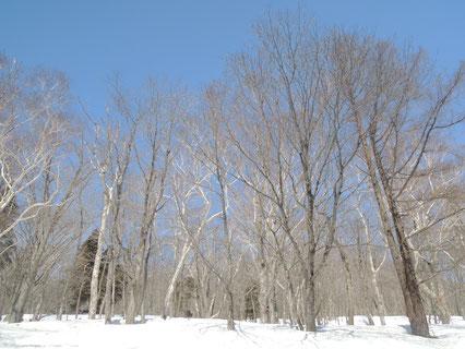 葉がないこの時期は空と地面がよく見えます