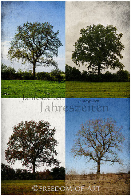 Eiche in den Jahreszeiten  -  An oak in the seasons