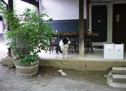 カフェの隣の家屋にいた犬。