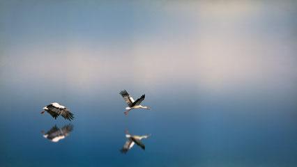 Photo Johannes Plenio by Unsplash