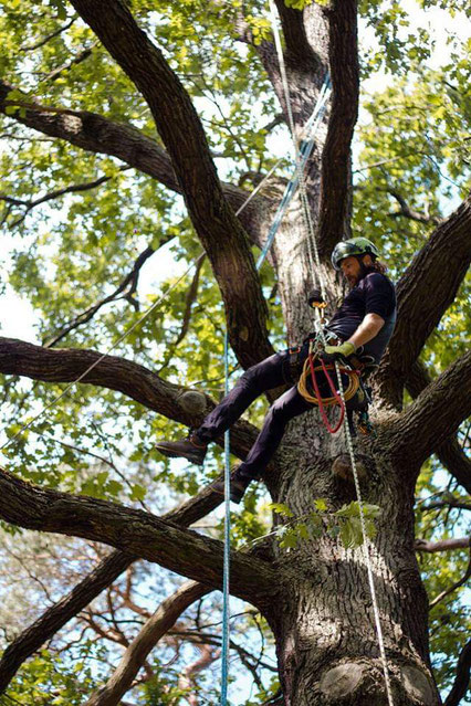 Arborist Tree Surgeon Tree Pruning Berlin