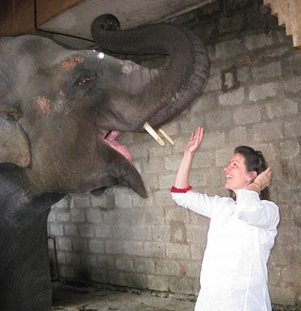 Elefant, Elefantendame, Lakshmi, Carmen Weder, begrüssen, Orbs, Indien
