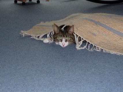 Erst nachsehen, was unter den Teppich gekehrt wurde,