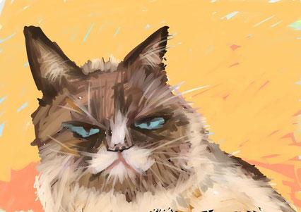 猫、青い目 2013
