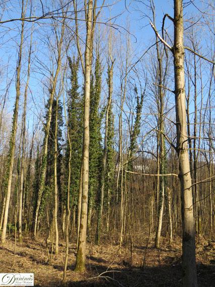 Frühling im Wald. Geschlagenes Holz by Daninas-Kunst-Werkstatt.at