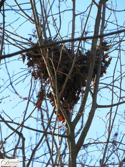 Frühling im Wald. Herz Nest in Baumkrone by Daninas-Kunst-Werkstatt.at