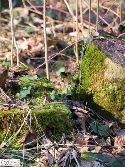 Frühling im Wald. Moos und Efeu by Daninas-Kunst-Werkstatt.at